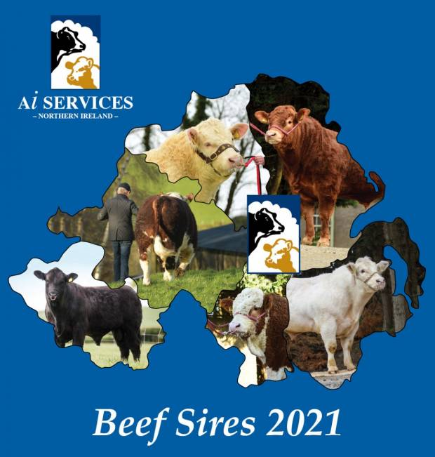 Export sales of beef semen at AI Services grow by 50%